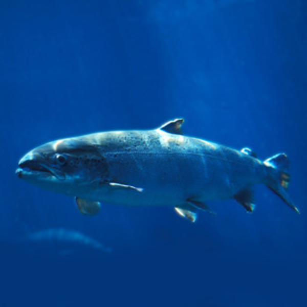 Океанол ОМЕГА-3: дары океана для вашего здоровья